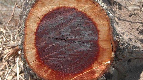 Timber Floor Installation Perth